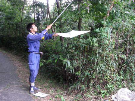有限会社ネッツ-業務紹介-昆虫類調査-任意調査ビーティング (樹木から落とす)