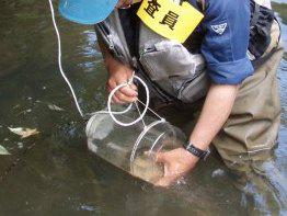 有限会社ネッツ-業務紹介-魚類調査-捕獲罠による調査セルビン