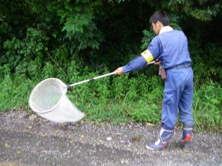 有限会社ネッツ-業務紹介-昆虫類調査-任意調査スイーピング (捕虫網)